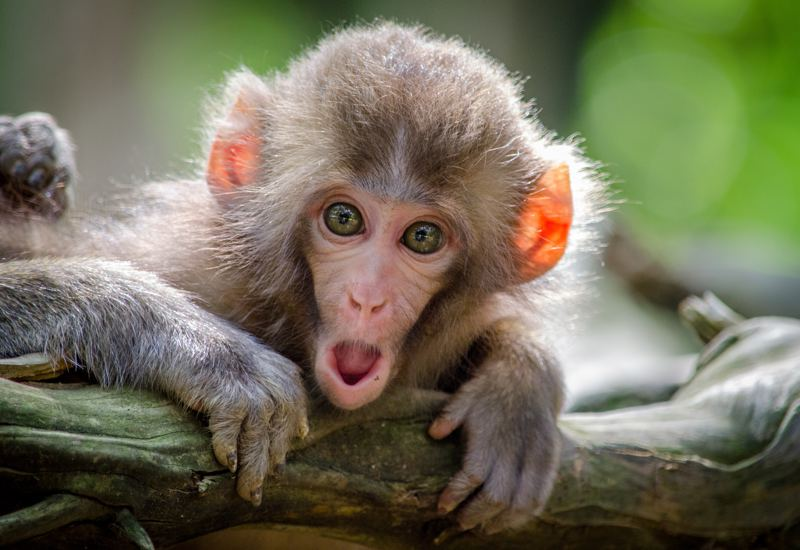 Studeren zonder stress : stop je monkey mind!